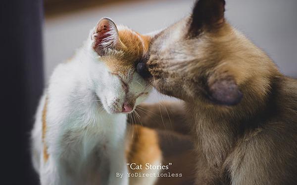猫のバレンタインデー!【猫ラブラブ画像】 (23)
