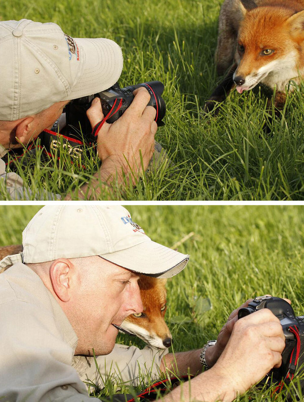 カメラに興味津々な動物の画像 (25)