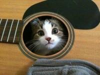 ジャストフィット猫!色々な場所に入り込む猫の画像特集