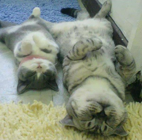 大人猫と子供猫の仲良し画像 (9)