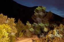 自然や木々など、立体的・幾何学的な構造を付加する光のアート
