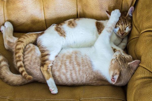 猫のバレンタインデー!【猫ラブラブ画像】 (11)