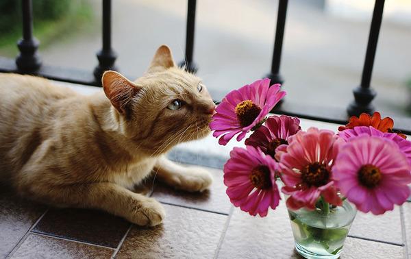 くんくん良い香り。花の匂いを嗅ぐ動物たちの画像 (15)