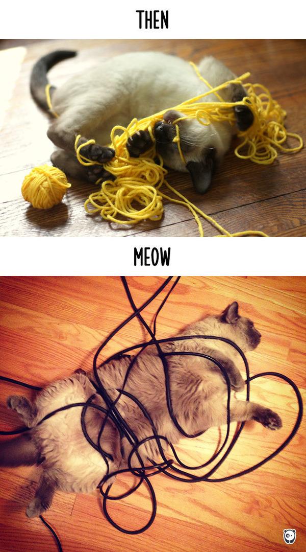 【猫画像】猫の生活を過去と現在で比較! (4)