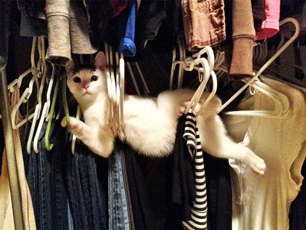 大ピンチに陥ったドジっ子なにゃんこ達!【猫画像33枚】 (28)