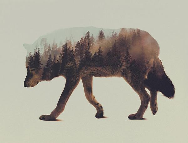 オオカミの二重露光写真byアンドレアス・リー
