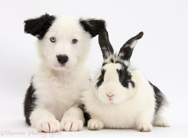 似てる!親が違うのにそっくりな動物画像30枚 (24)