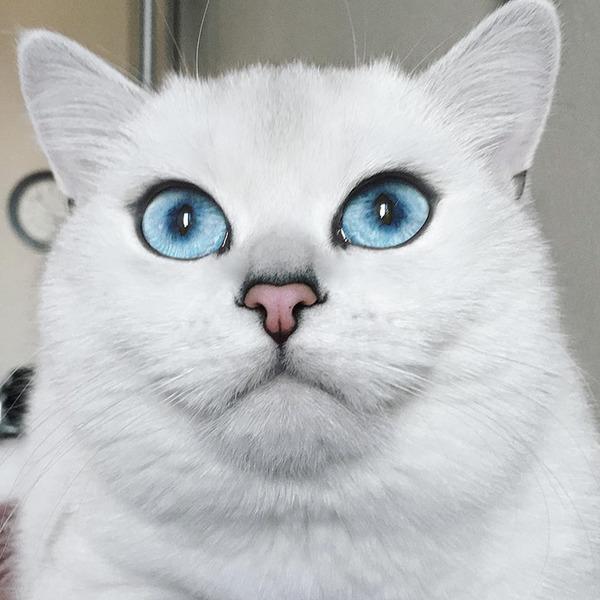 美しい…。綺麗な青い瞳をした白猫が話題!【猫画像】 (9)