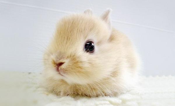 超ふわふわ!モフモフで愛らしいウサギの画像20枚 (15)