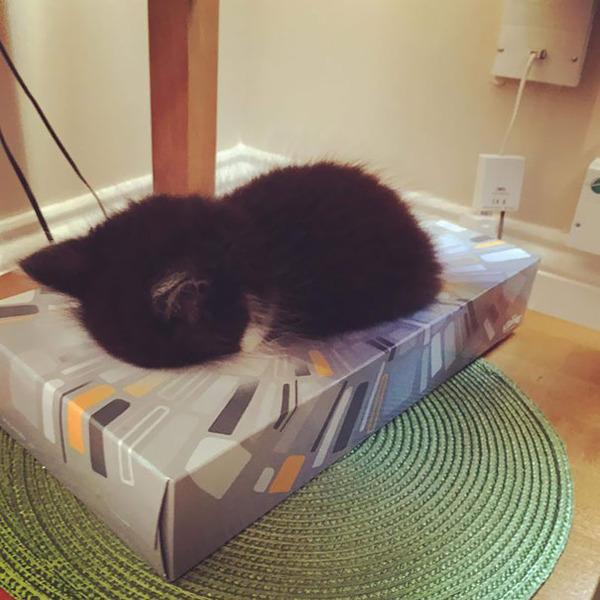 寝てるだけなのに…かわいすぎる猫たちの画像 (17)