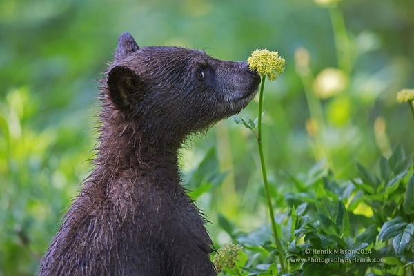くんくん良い香り。花の匂いを嗅ぐ動物たちの画像 (40)