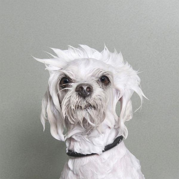 洗い立てだぜ!濡れた犬の写真シリーズ『Wet Dog』 (17)