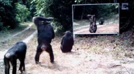 鏡を見た野生動物の反応。アフリカのジャングルに鏡を設置