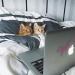 猫のバレンタインデーの過ごし方を調査!【猫ラブラブ画像】