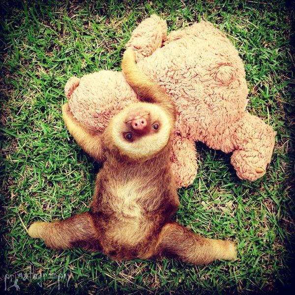 癒し系動物ナマケモノの赤ちゃんが超かわいい画像 (9)