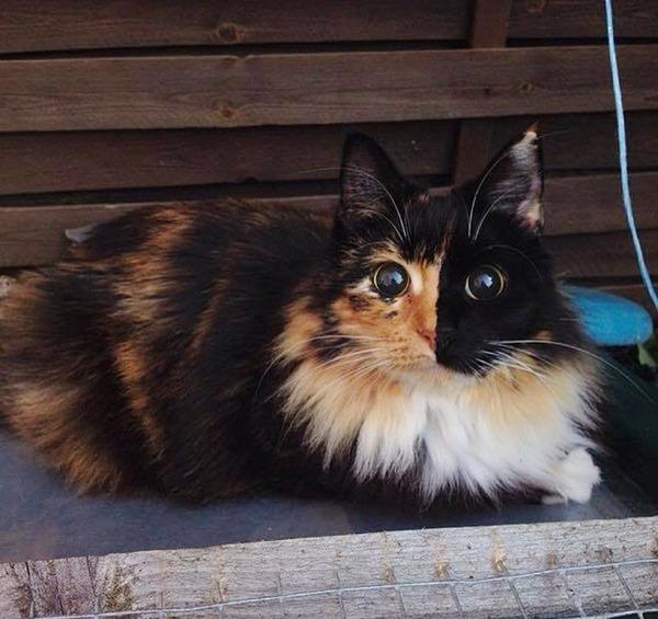 盲目の迷い猫。珍しい毛色のキメラネコが愛を知る (5)