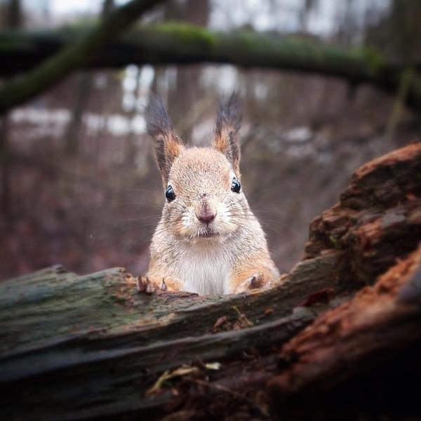 コンスタ・パンカ (Konsta Punkka)の野生動物写真 (2)