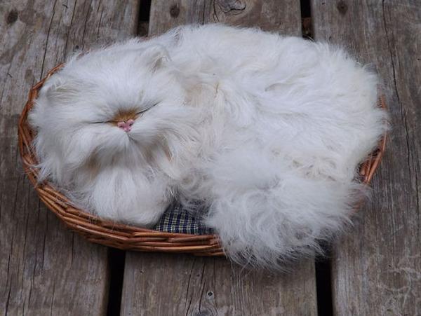 綿菓子フワフワ!モフモフしたくなる長毛種の猫画像 (24)