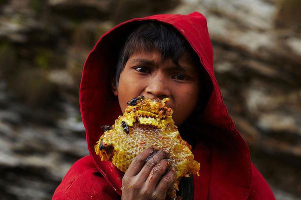 巨大な蜂の巣とのバトル!ネパールの伝統的な蜂蜜ハンター (9)