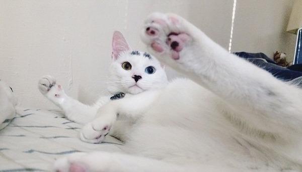 猫の肉球の画像2