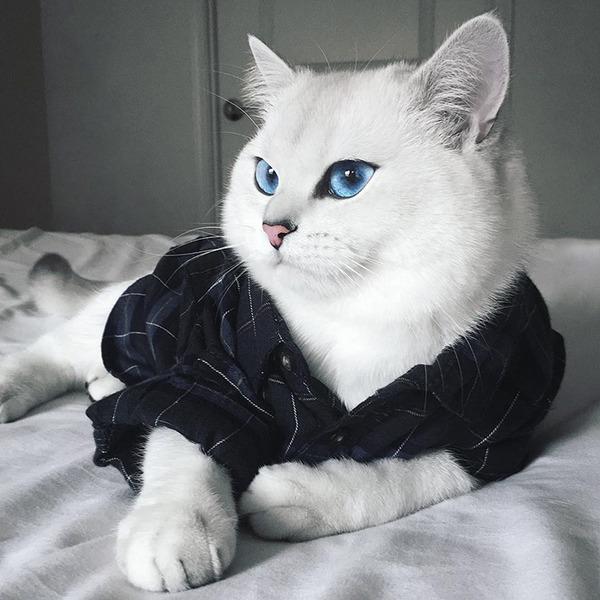 美しい…。綺麗な青い瞳をした白猫が話題!【猫画像】 (12)