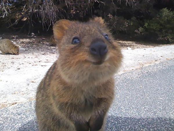 ニッコリ。幸せそうな笑顔が素敵な動物画像特集! (10)