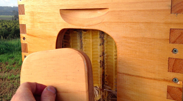 新しい蜂の巣の発明