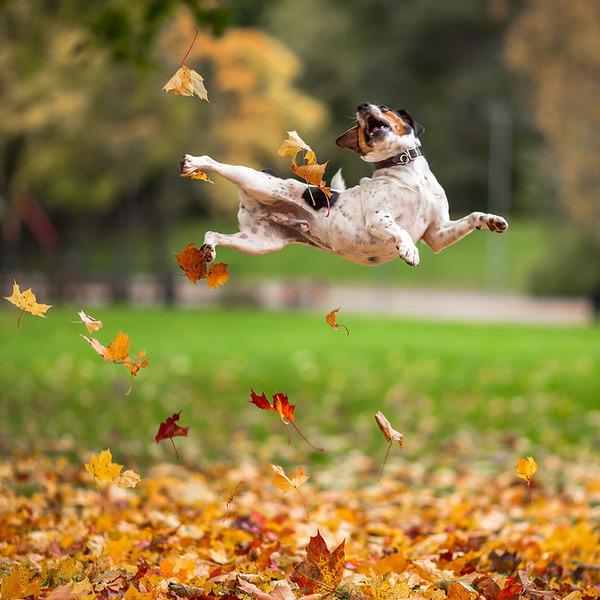 紅葉や秋の森の中を楽しむ動物たちの画像 (16)