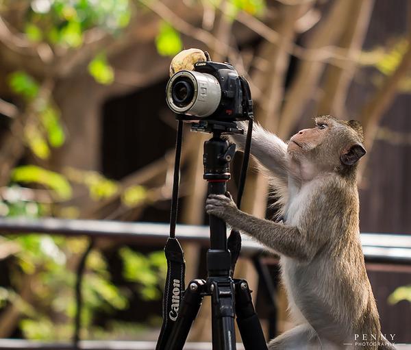 カメラに興味津々な動物の画像 (12)