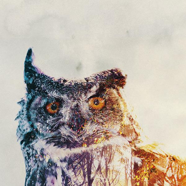 フクロウの二重露光写真byアンドレアス・リー 3