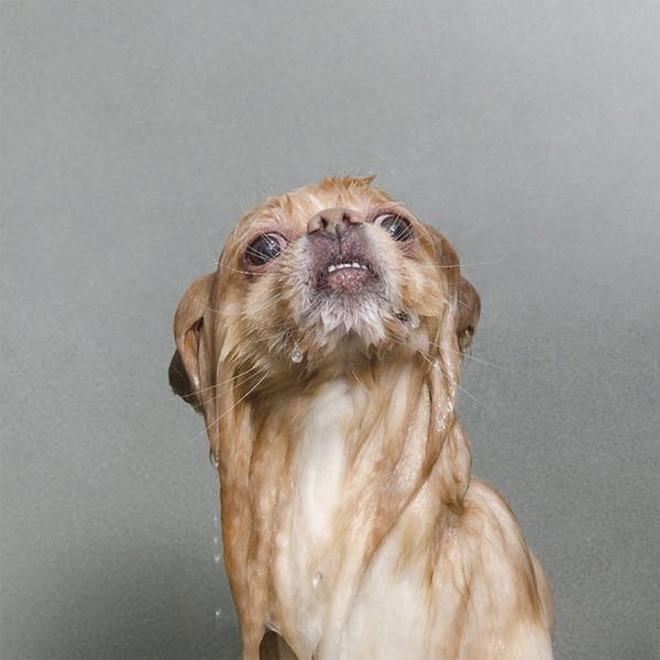 洗い立てだぜ!濡れた犬の写真シリーズ『Wet Dog』 (12)