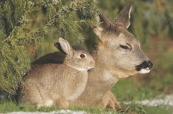 種が違うけど似てる動物たちの画像 (4)