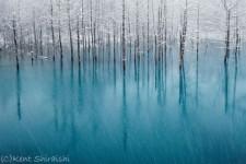 【幻想的】北海道美瑛の丘にある「青い池」の写真がとても綺麗!【画像】