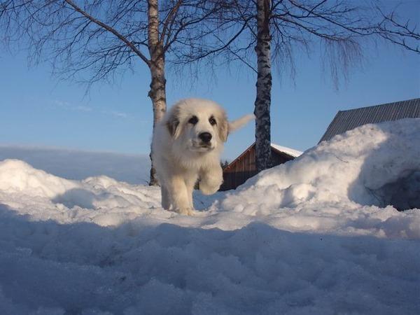 遠近感と錯覚の関係で超巨大に見える犬画像 (6)