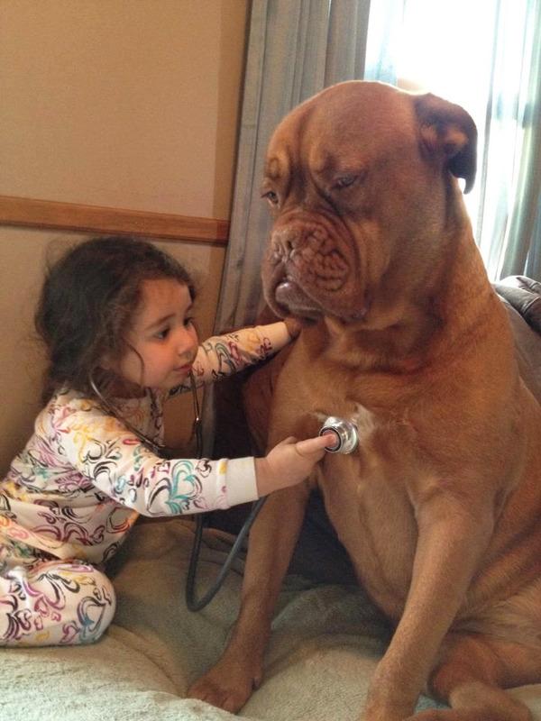 ペットは大切な家族!犬や猫と人間の子供の画像 (86)