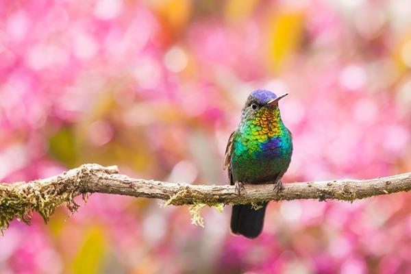 ハチドリ、可愛い、美しい小鳥の写真 (13)
