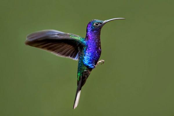 ハチドリ、可愛い、美しい小鳥の写真 (10)