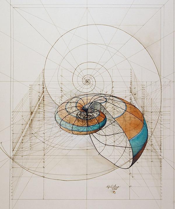 黄金比で描かれた手描きイラスト集!蝶や貝殻など (6)