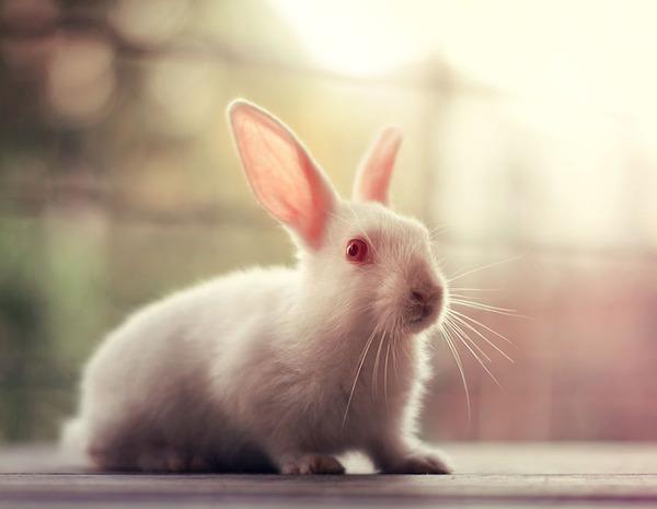 ハローウサギ