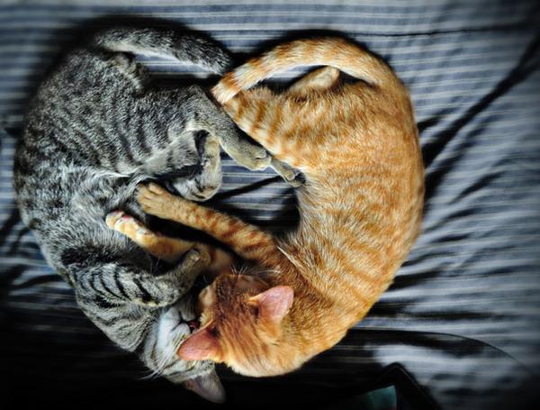 猫のバレンタインデー!【猫ラブラブ画像】 (67)