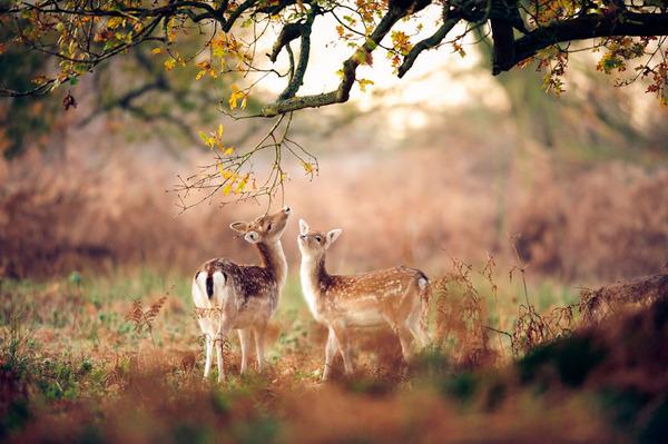紅葉や秋の森の中を楽しむ動物たちの画像 (14)