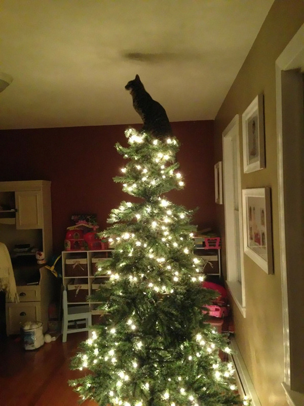 猫、あらぶる!クリスマスツリーに登る猫画像 (31)