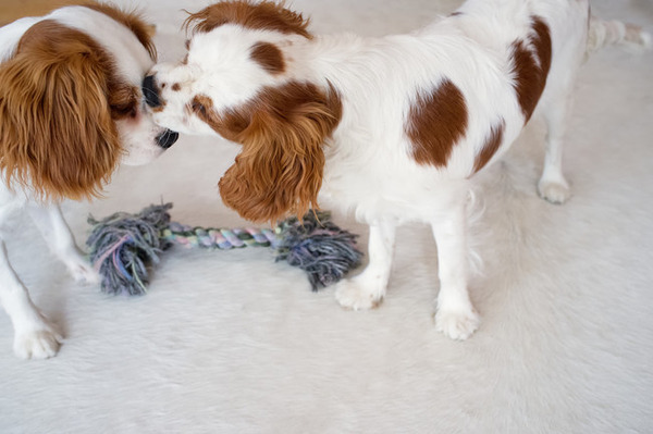 子犬のキス 3