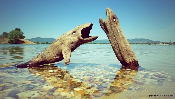 歪な形がゾンビっぽい!ドナウ川の流木で作られた彫刻作品 (2)