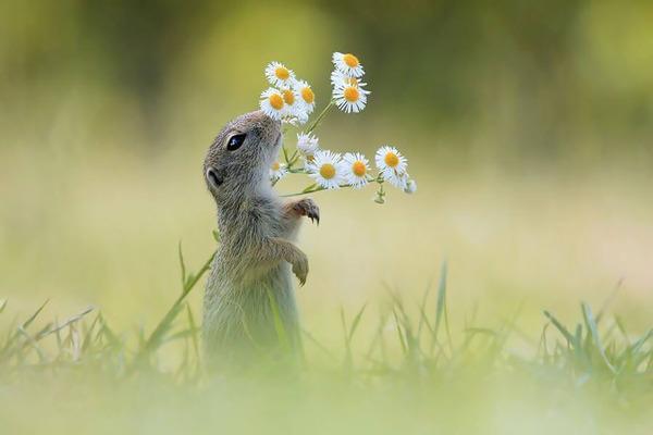くんくん良い香り。花の匂いを嗅ぐ動物たちの画像 (44)