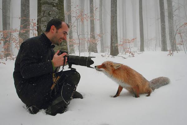 カメラに興味津々な動物の画像 (19)