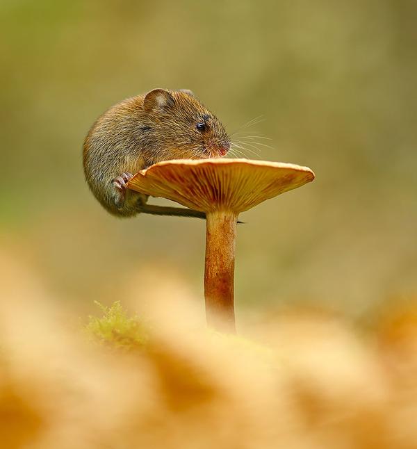 紅葉や秋の森の中を楽しむ動物たちの画像 (17)