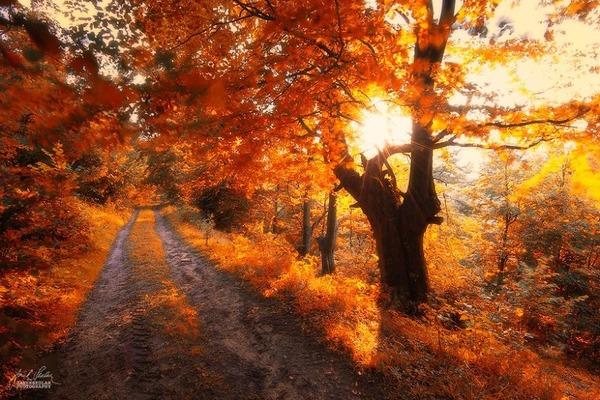 秋といえば紅葉や落葉の季節!美しすぎる秋の森の画像20枚 (20)