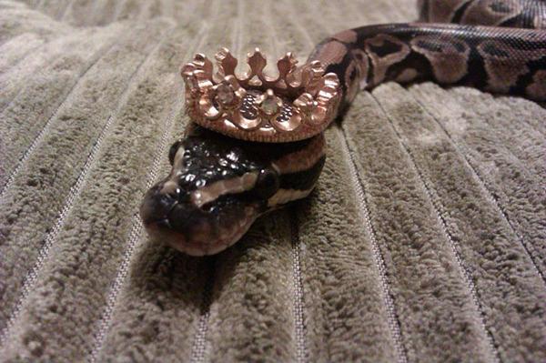 なんだこれカワイイぞ!帽子を被ったヘビ画像特集 (13)
