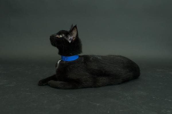 アメリカのアニマルシェルターで里親を待つ黒猫たちの写真 (5)